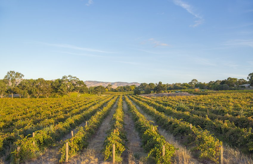 The Barossa Valley in South Australia