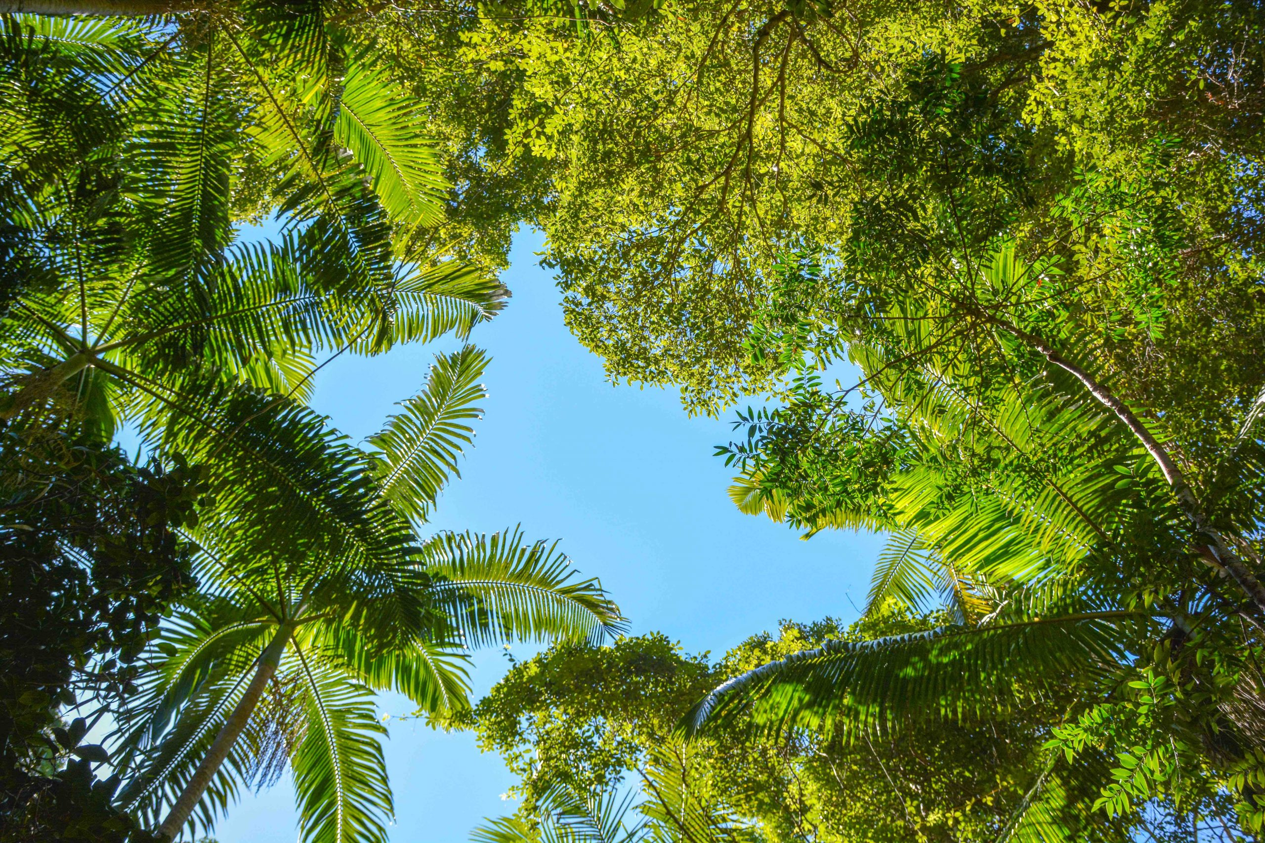 rainforest Canopy at Pile Valley on Fraser Island